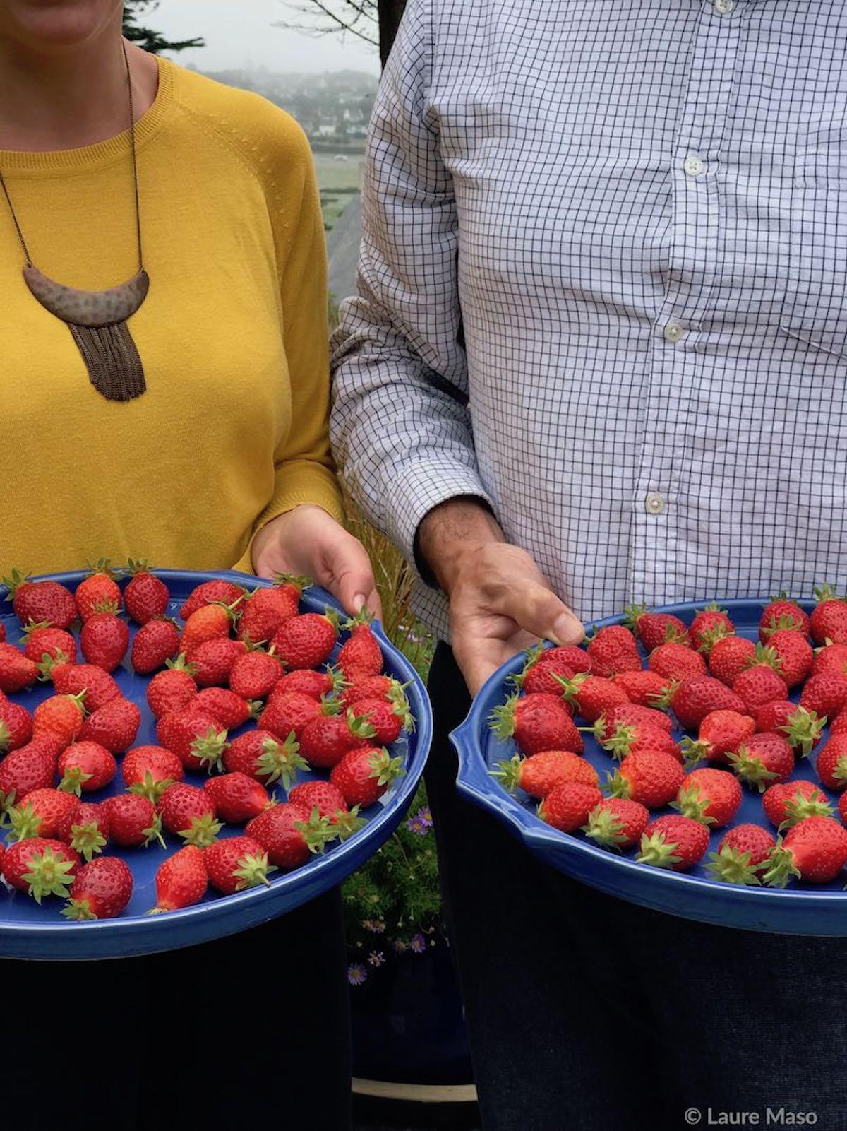 labelaure blog culinaire fraises de plougastel variété citadine