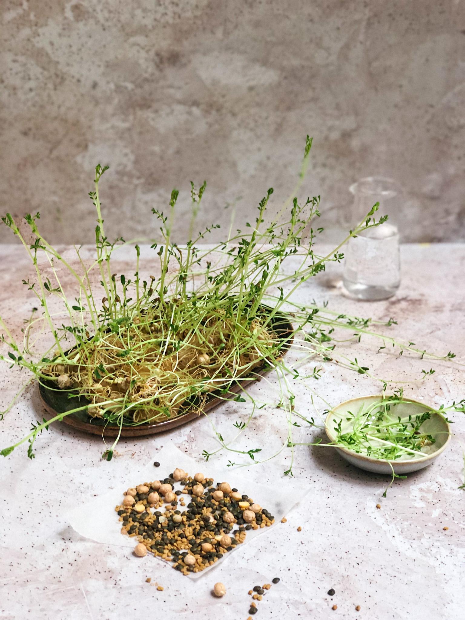 labelaure graines germées tutoie fait-maison dit alfalfa lentilles chia lin haricots mungo trempage germination