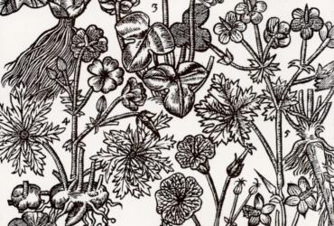 6 plantes pour renforcer son immunité contre les virus