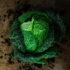 Ces expressions françaises autour des légumes et des fruits